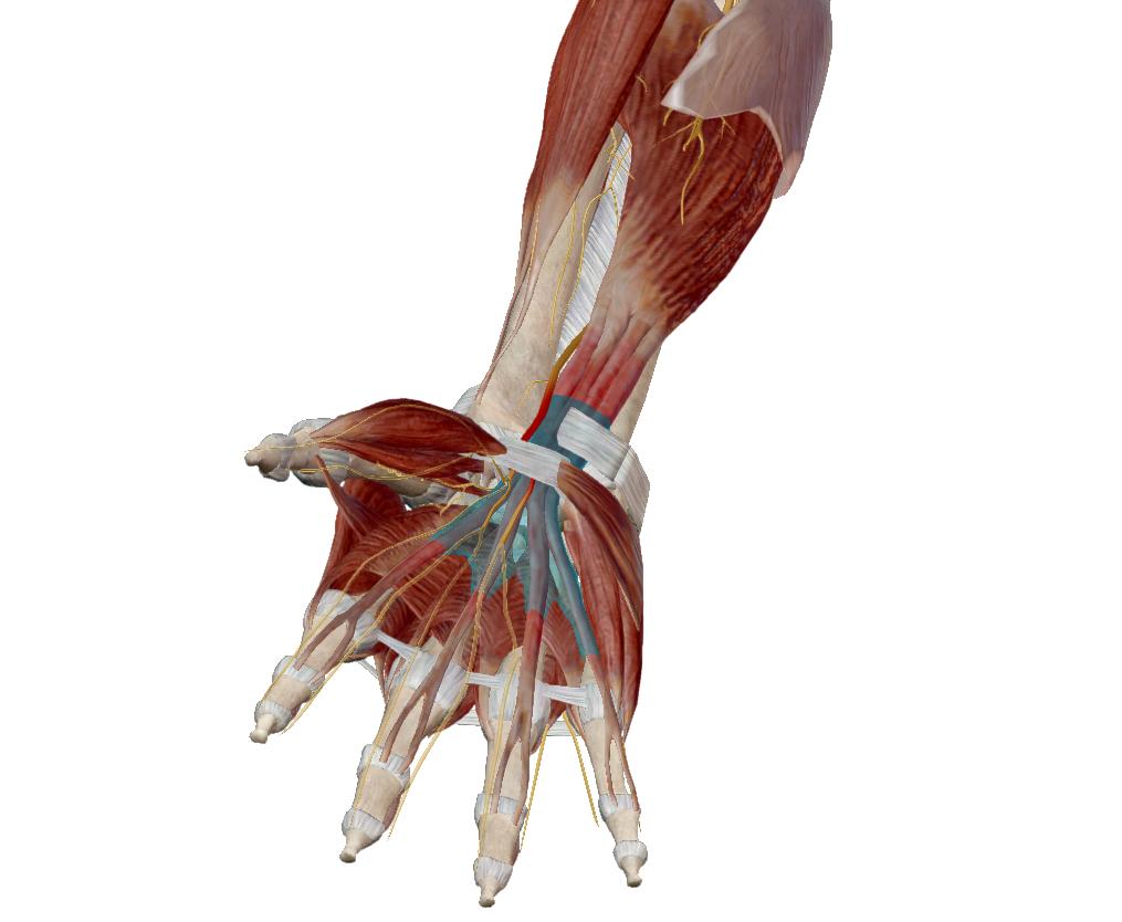 fájdalom a kéz könyökízületeiben edzés után holdfény ízületi fájdalmak esetén