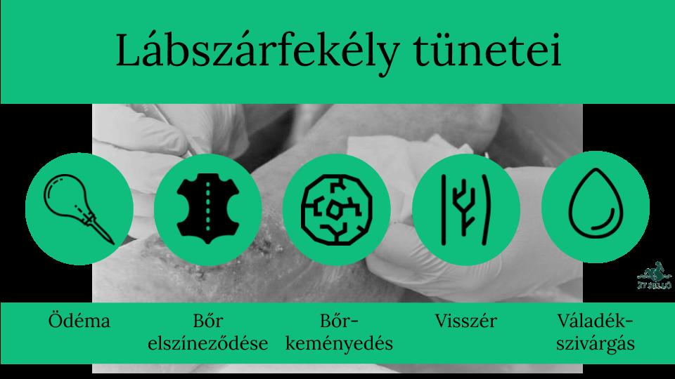 lábszárfekély diétája)