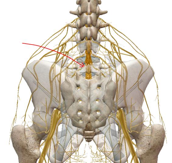 osteoarthritis first metatarsophalangeal joint icd 10