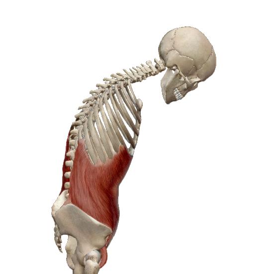 súlyos ízületi fájdalomkezelési áttekintések