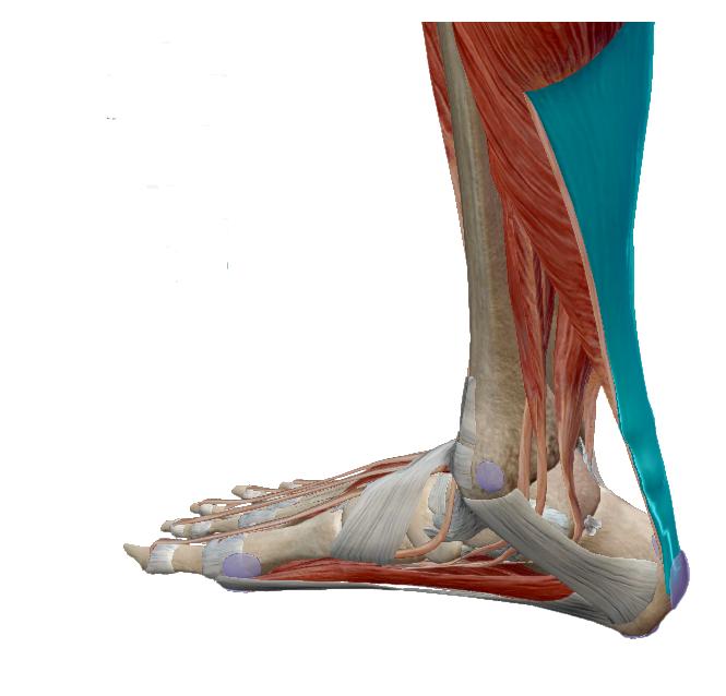 miért fáj a lábak ízületei futás után ízületi gyulladás kezelésére artrózisos tabletták és kenőcsök